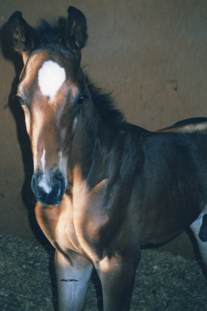 Spinnaker Farm Equine | Reproduction